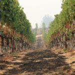 California Wine Country's message after fires: We're still here - C'mon » TikTokJa Video Downloader